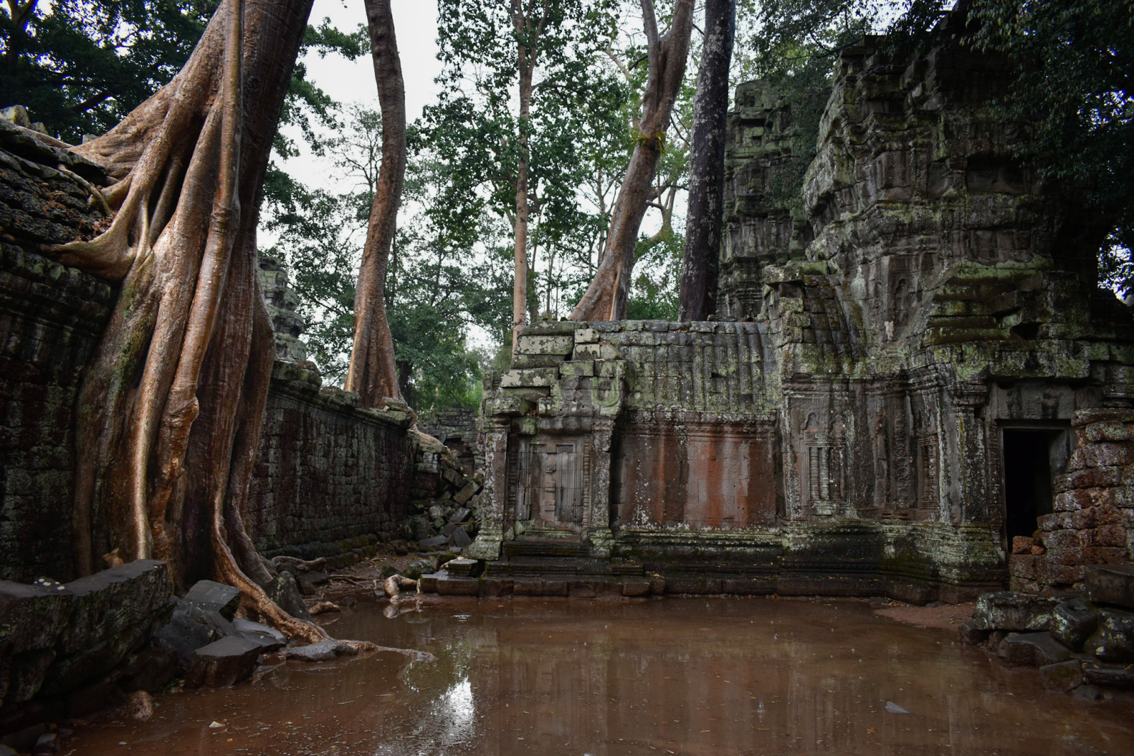 cambodia-photo-tours-angkor-wat-ta-prohm-temple