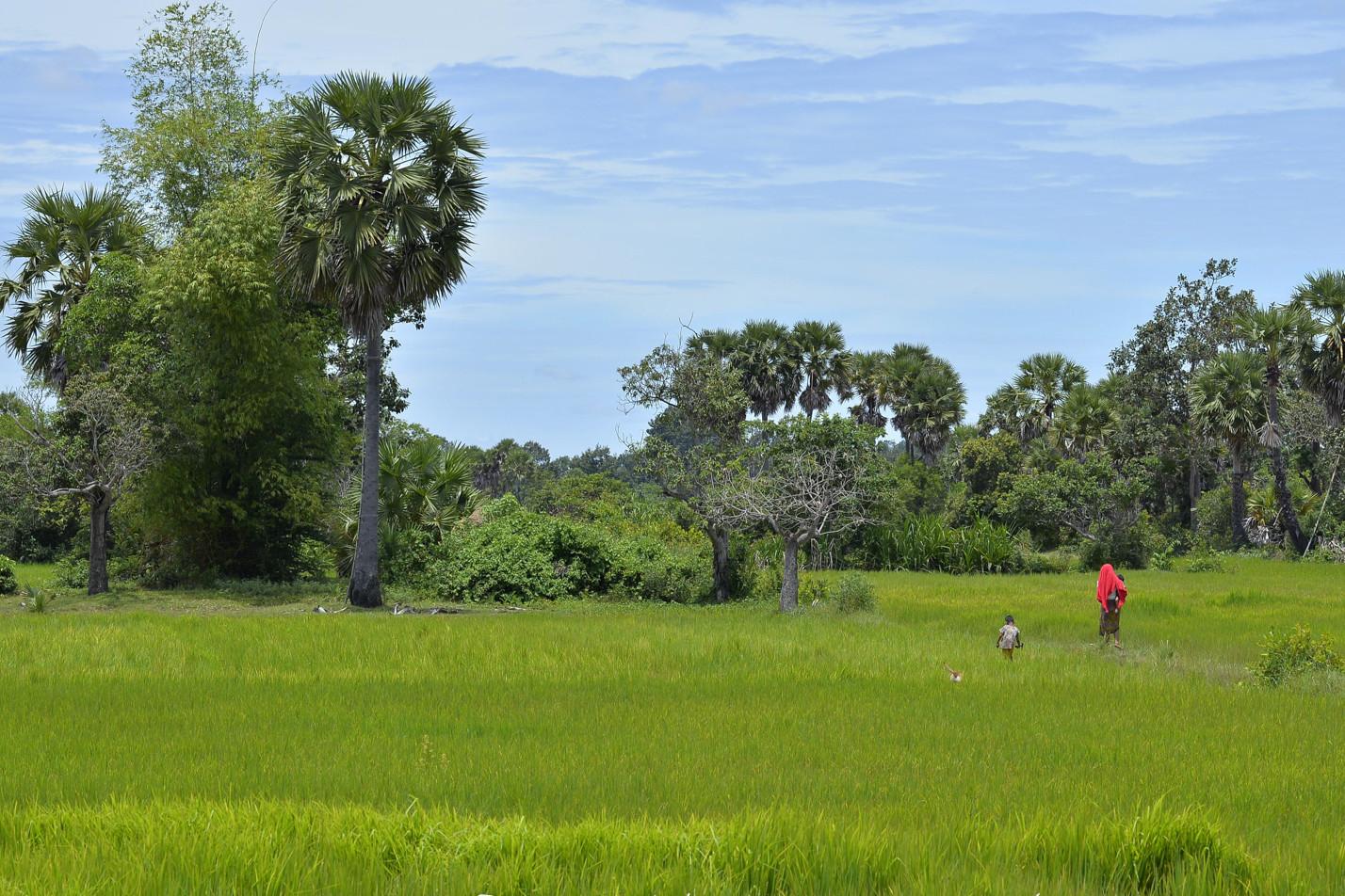 cambodia-photo-tours-landscapes-1